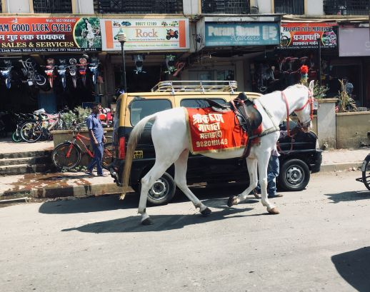 Horse for hire on Mumbai's streets